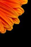 Blocco per grafici dei petali del Gerbera immagini stock