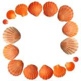 Blocco per grafici dei Seashells fotografie stock