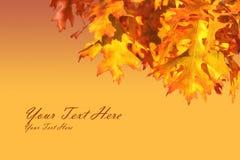 Blocco per grafici del foglio di autunno Immagini Stock
