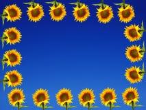 Blocco per grafici del girasole su terra blu Fotografia Stock Libera da Diritti