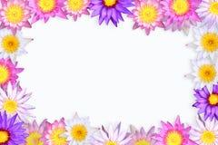 Blocco per grafici del loto. Fotografie Stock