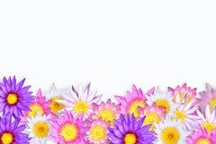 Blocco per grafici del loto. Immagine Stock