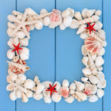 Blocco per grafici del Seashell Immagini Stock