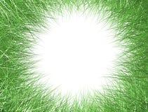 Blocco per grafici dell'erba Fotografie Stock Libere da Diritti