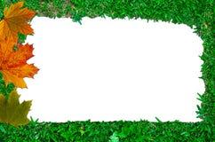 Blocco per grafici dell'erba Fotografia Stock