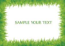 Blocco per grafici dell'erba Fotografie Stock