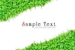 Blocco per grafici dell'erba nella priorità bassa bianca Fotografia Stock
