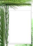 Blocco per grafici della foto della palma Fotografia Stock