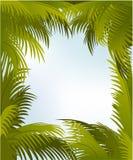 Blocco per grafici della palma Fotografia Stock Libera da Diritti