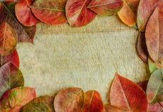 Blocco per grafici della priorità bassa di autunno Fotografia Stock
