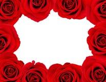 Blocco per grafici della Rosa Immagini Stock