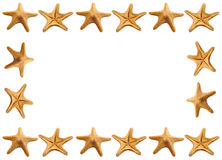 Blocco per grafici delle stelle marine Fotografie Stock