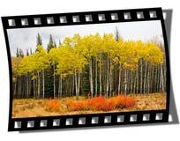 Blocco per grafici di Filmstrip Fotografia Stock