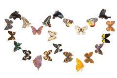 Blocco per grafici di sharp del cuore della farfalla Immagine Stock