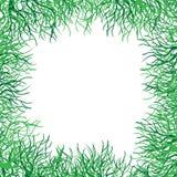 Blocco per grafici di vettore dell'erba verde Fotografie Stock
