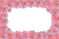 blocco per grafici fatto dei fiori del crisantemo Immagine Stock Libera da Diritti