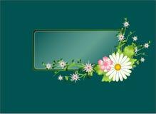 Blocco per grafici floreale con la camomilla Immagini Stock Libere da Diritti