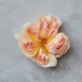 Blocco per grafici floreale con le rose Fotografia Stock Libera da Diritti