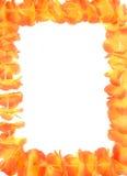 Blocco per grafici hawaiano dei leu Fotografia Stock