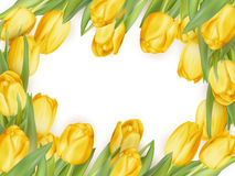Blocco per grafici isolato del tulipano ENV 10 Fotografia Stock Libera da Diritti