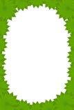 Blocco per grafici ovale dei fogli del fiore di figura immagini stock