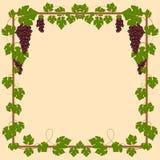 Blocco per grafici quadrato dell'uva royalty illustrazione gratis