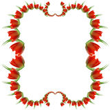 Blocco per grafici rosso del tulipano Immagini Stock Libere da Diritti
