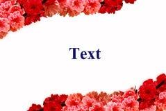 Blocco per grafici rosso e dentellare dei fiori Fotografia Stock
