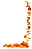 Blocco per grafici variopinto dei fogli di autunno Immagine Stock Libera da Diritti