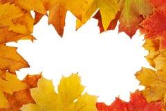 Blocco per grafici variopinto dei fogli di autunno caduti Immagini Stock Libere da Diritti