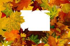 Blocco per grafici variopinto dei fogli di autunno caduti Fotografie Stock Libere da Diritti