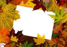 Blocco per grafici variopinto dei fogli di autunno caduti Fotografie Stock