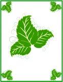 Blocco per grafici verde Fotografie Stock Libere da Diritti