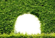 Blocco per grafici verde Fotografia Stock Libera da Diritti