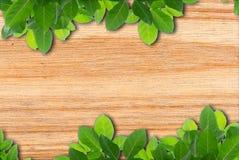 Blocco per grafici verde del foglio Fotografie Stock