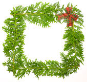 Blocco per grafici verde del ginepro con la decorazione Fotografia Stock Libera da Diritti