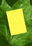 Blocco per grafici verde intenso dell'annuncio del foglio Immagini Stock