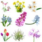 Block-Blumen stockbild