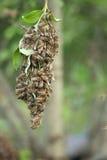 Block der Bienen Lizenzfreie Stockfotos