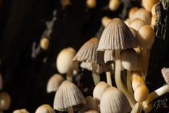Block der Pilze Lizenzfreie Stockbilder
