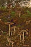 Block der Pilze Lizenzfreies Stockfoto
