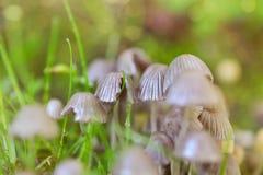 Block der Pilze Stockfoto