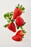Block der reifen Erdbeeren Stockfotografie