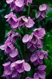 Block der rosafarbenen Blumen Stockbilder