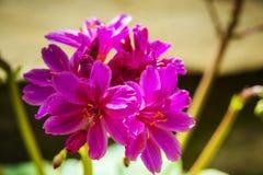 Block der rosafarbenen Blumen Lizenzfreies Stockbild