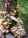 Block des Pilzes Lizenzfreies Stockbild