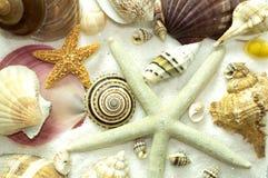 Block des Seashells-Hintergrund-Musters Stockfotos