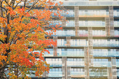 Block of flats with a autumnal tree Stock Photography