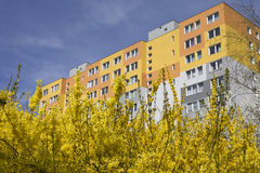 Block of flats. With trees in blossom in the front, Prague, Czech republic stock photo