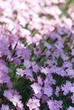 Block-FOrosafarbene Wildflowers Lizenzfreies Stockfoto